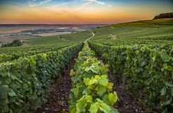 Champagne-Region in Frankreich Eine schöne Ansicht Stockfotografie