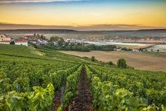Champagne-Region in Frankreich Eine schöne Ansicht Lizenzfreies Stockfoto