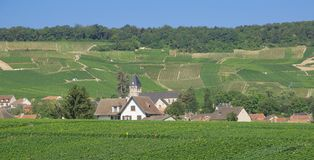 Champagne Region near Epernay,France Royalty Free Stock Images