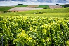 Champagne, Reims Montagne de Reims Heuvels met wijngaarden worden behandeld die frankrijk stock foto's