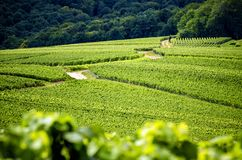 Champagne, Reims. Montagne de Reims. Hills covered with vineyards. France. Champagne, a panoramic road that crosses the wine region and makes us know the major stock image