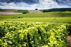 Champagne, Reims Montagne de Reims Montes cobertos com os vinhedos france imagens de stock royalty free