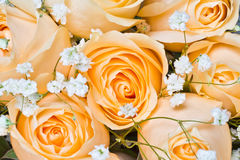 Champagne roses with gypsophila paniculata stock images