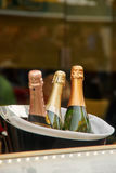 CHampagne. Three bottles of champagne in an ice bucket Royalty Free Stock Images