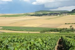 Champagne vineyard Royalty Free Stock Image