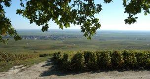 Champagne vineyard Royalty Free Stock Photo