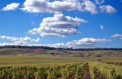 Champagne Vineyard Field In France Stock Photo