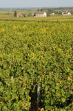 Champagne vineyards Stock Images