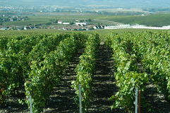 Champagne vineyards Royalty Free Stock Photo