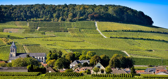 Champagne vineyards Mancy in Marne department, France Royalty Free Stock Photography