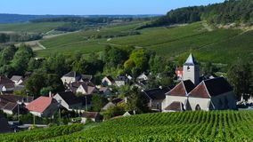 Champagne vineyards in the Montagne de Reims area of the Marne department near to Ville-Dommange, stock footage