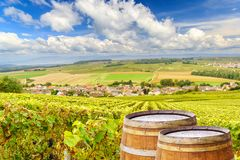 Champagne vineyards with old wooden barrel on row vine green grape in champagne vineyards background at montagne de reims. France stock photo