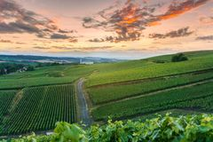 Champagne Vineyards at sunset Montagne de Reims. France royalty free stock photography