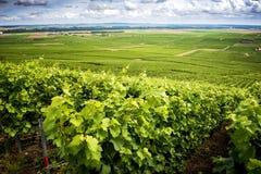 Champagne, vinhedo nos montes perto de Vernezay No fundo a planície com vinhedos france fotos de stock