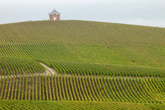Champagne-Weinberg Lizenzfreie Stockfotos