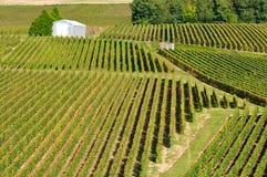 Champagne-Weinberg (Frankreich) Lizenzfreie Stockfotografie