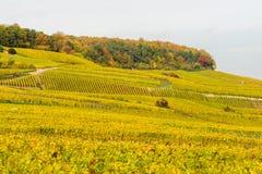 Champagne-Weinfelder während des Herbstes Lizenzfreie Stockbilder