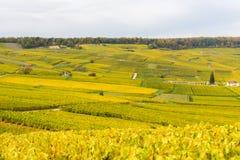 Champagne-Weinfelder während des Herbstes Lizenzfreie Stockfotos