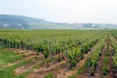 Champagne-wijngaard Royalty-vrije Stock Foto's