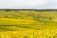 Champagne wine fields during autumn Royalty Free Stock Photos