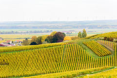 Champagne wine fields during autumn Stock Photos