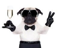 Champagneexponeringsglashund Royaltyfri Fotografi