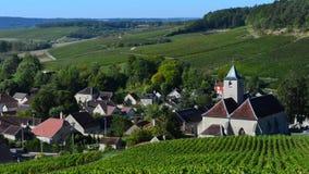 Champagnevingårdar i Montagne de Reimsområdet av den Marne avdelningen nära till Ville-Dommange,