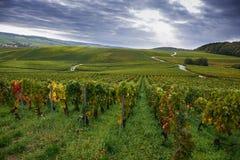 Champagnevingårdar nära Epernay, Frankrike royaltyfri bild