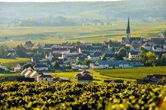 Champagnevingårdar Sermiers i den Marne avdelningen, Frankrike royaltyfri fotografi