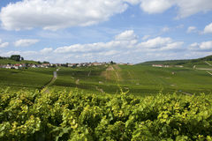 Champaign vineyards Royalty Free Stock Photos