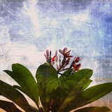 Champak. Grunge flower background in summer style Royalty Free Stock Images