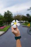 Champaka& bianco x27; fiore nel woman& x27; mano di s Immagine Stock