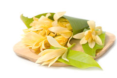 Champaka flower are blooming Stock Image
