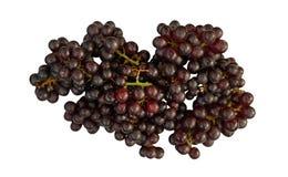 Champange grapes Stock Image
