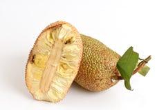 Champedak (thai name), bankong (Artocarpus integer). Stock Photo