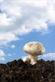 Champiñón en el cielo Fotos de archivo