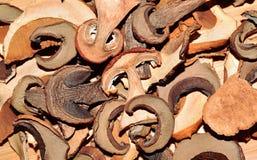 Champiñones secados Imagen de archivo
