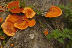 Champignon à un arbre Photographie stock libre de droits