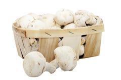 champignon μανιτάρια Στοκ Φωτογραφία