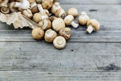 champignon φρέσκο μανιτάρι Στοκ εικόνα με δικαίωμα ελεύθερης χρήσης