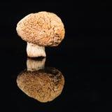Champignon высушенного гриба на черной предпосылке Стоковое Изображение RF
