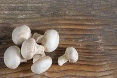 Champignon гриба изолированный на деревянной предпосылке Стоковое Изображение