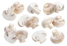 Champignon гриба изолированный на белой предпосылке Стоковые Фотографии RF