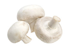 Champignon гриба на белой предпосылке Стоковое Фото