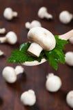 Champignon гриба на ложке Стоковая Фотография RF