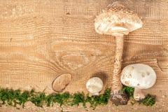 Champignon и парасоль гриба леса на деревенском деревянном backgrou Стоковое Фото
