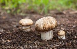 Champignon растя в лесе Стоковое Изображение