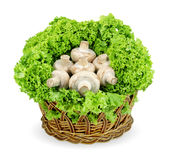 champignon Στοκ Εικόνες