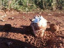 Champignon photos libres de droits