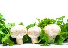 champignon arkivbild